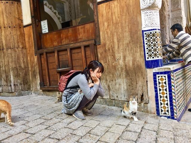 モロッコ、フェズのネコ
