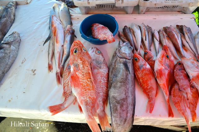 モロッコ、エッサウィラの魚